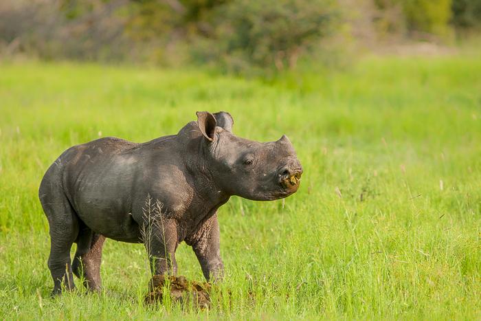 baby rhino blog