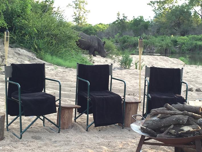 Rhino arrival