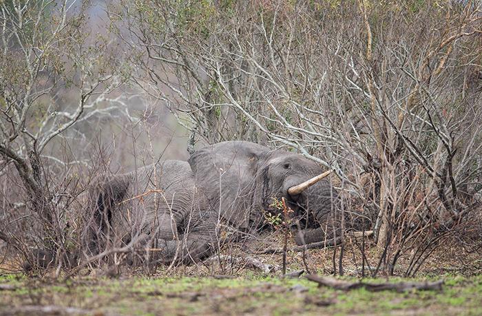 elephant-resting_sa_ug_20141023__90r7162