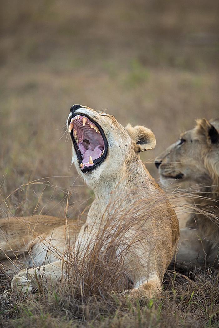 lions_sa_ug_20141021__90r5448
