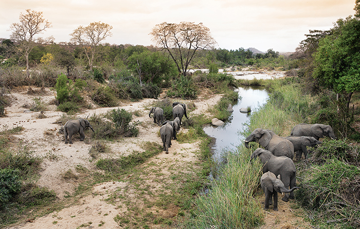 Elephants congregate around waterholes during the dry months. Photograph by Elsa Young.