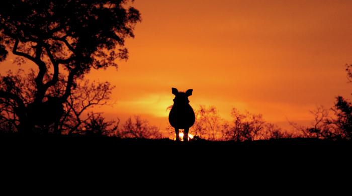 160_6025 Warthog Sunset
