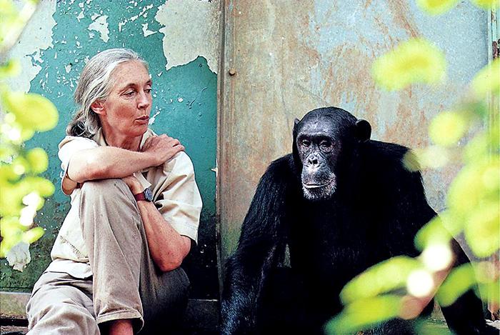 Jane-Goodall-2