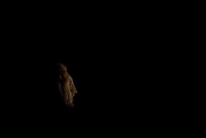 Side Light of male lion