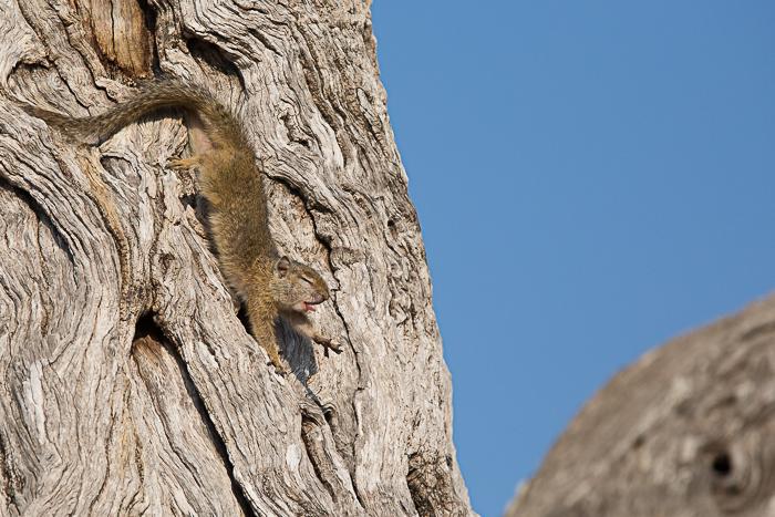 SquirrelStretch