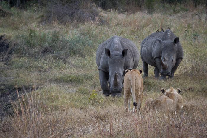 Andrea-Campbell-Munghen-Pride-vs-White-Rhino