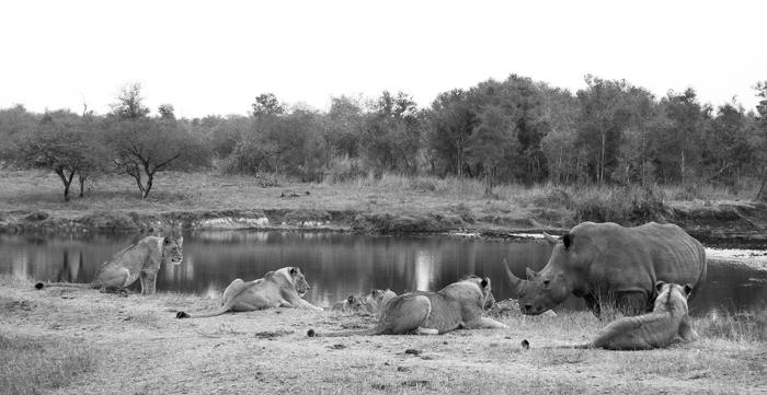 Andrea-Campbell-Munghen-Pride-vs-Rhino-Siding61-Dam