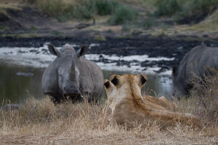 Andrea-Campbell-Mughen-Pride-White-Rhino