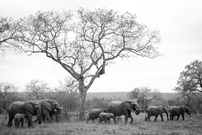 Andrea-Campbell-Elephant-Herd