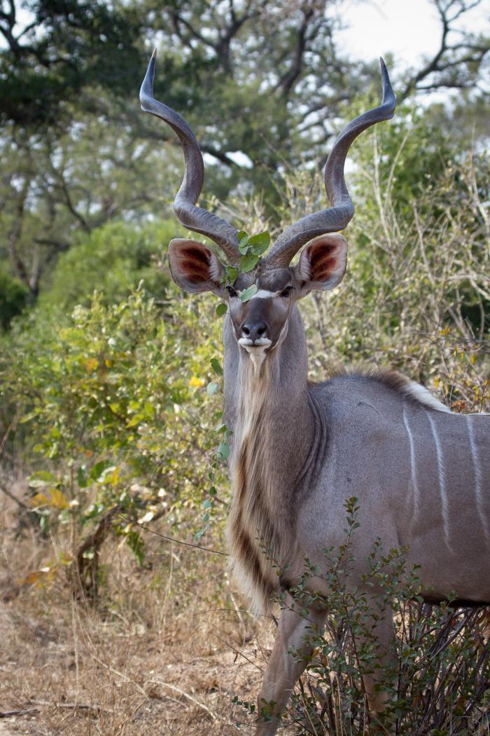 Andrea-Campbell-Kudu