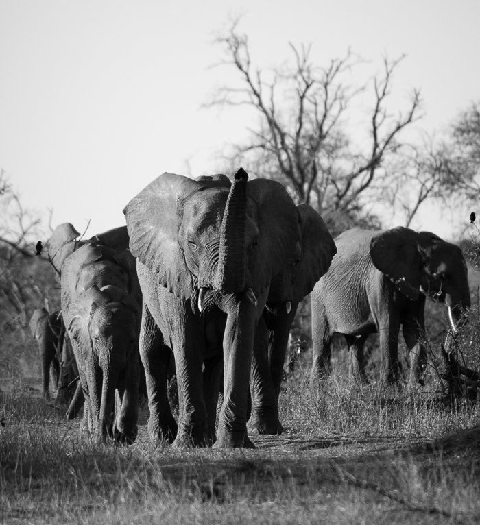 Elephant herd.Kevin Power