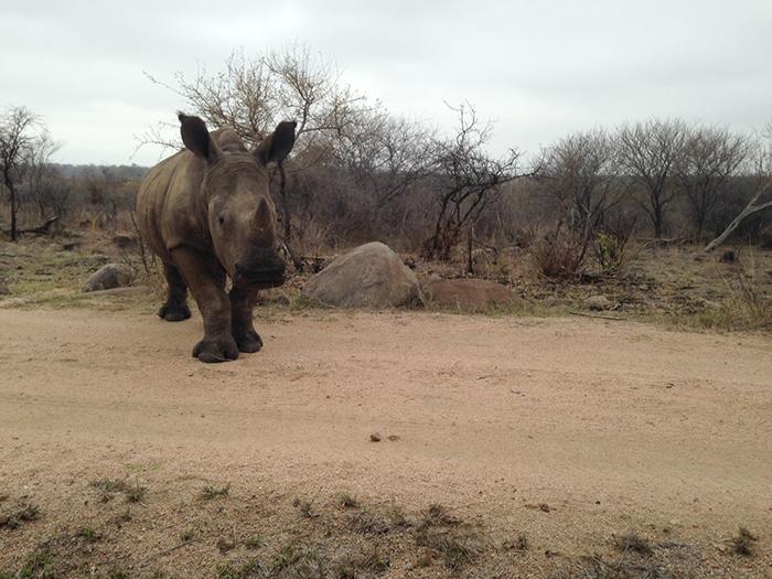Andrea-Campbell-Ihpone-rhino