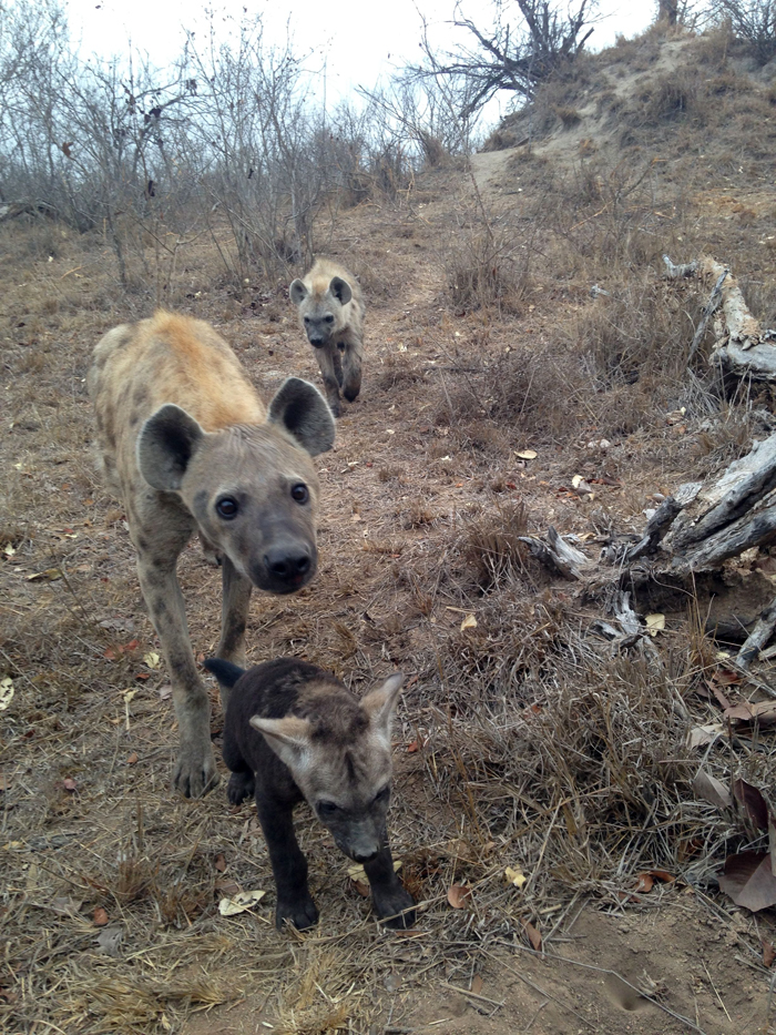 Andrea-Campbell-Iphone-Hyena-den