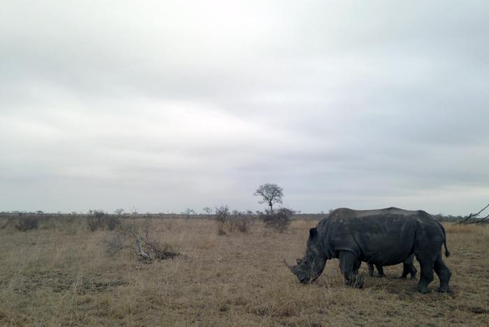 Andrea-Campbell-Ihpone-Rhino-Grey-Sky