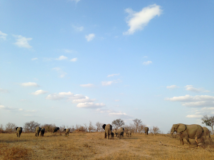 Andrea-Campbell-Elephant-herd