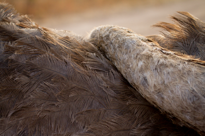Andrea-Campbell-ostrich-feathers