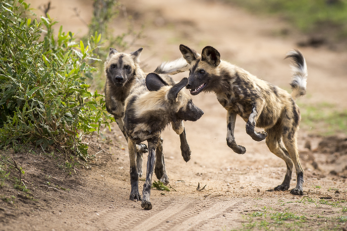 Mondza-dogs2-1
