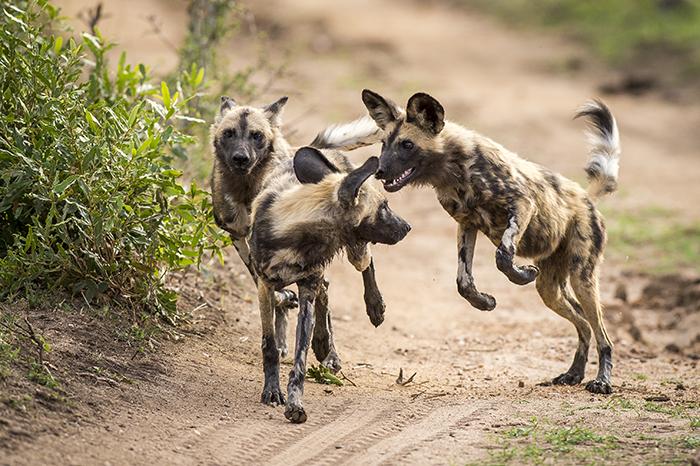 Mondza dogs2-1