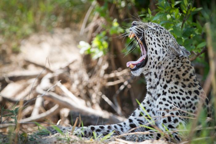 Dudley Female Yawn