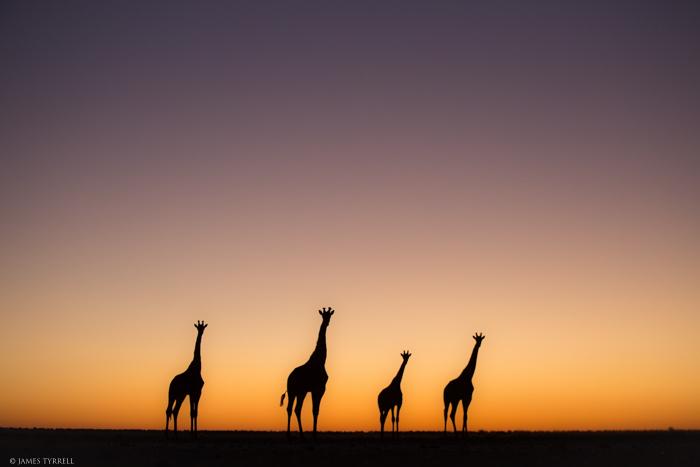 Giraffe_Silhouette