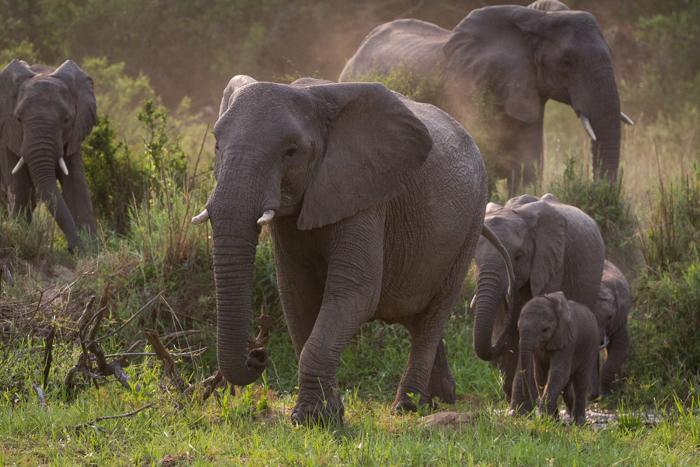 Elephants_Finfoot
