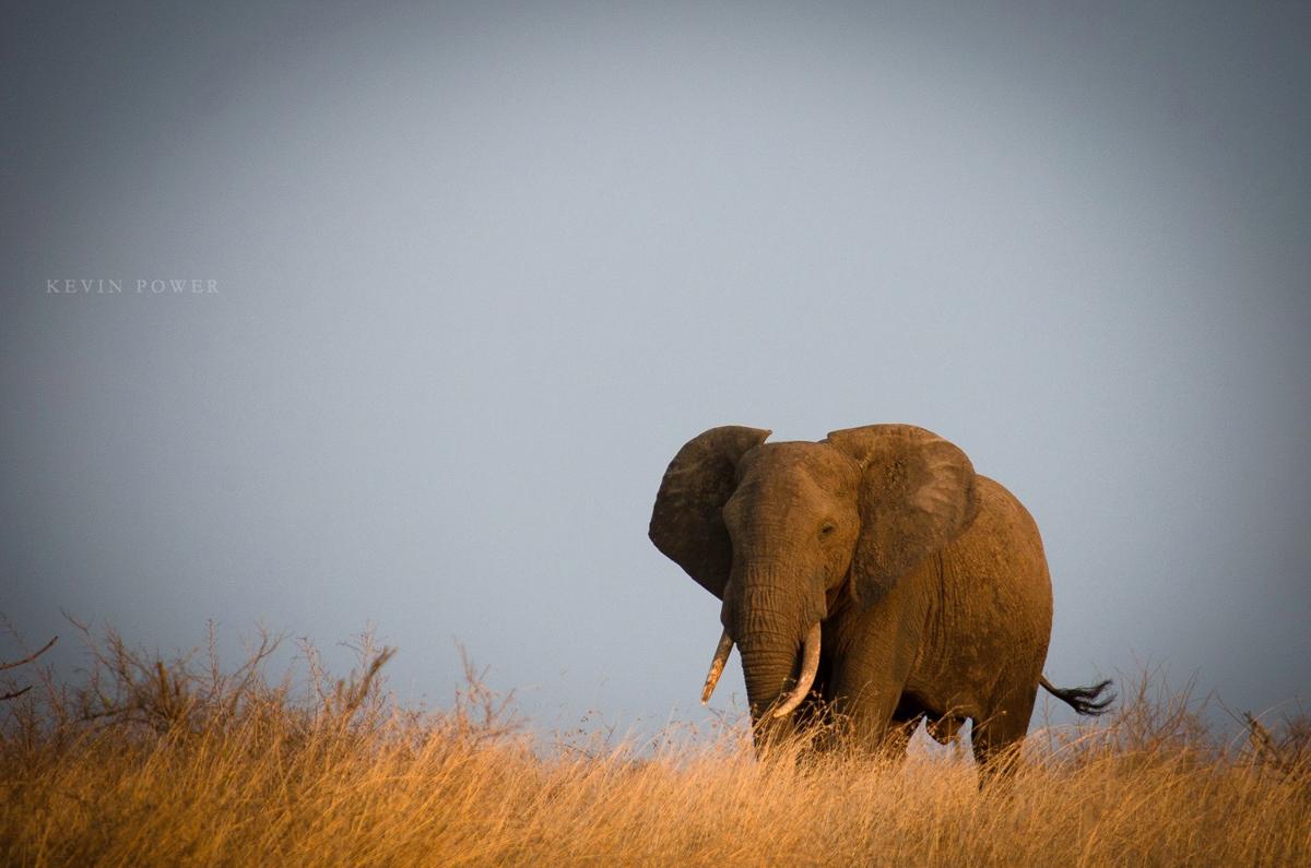 Kev Elephant