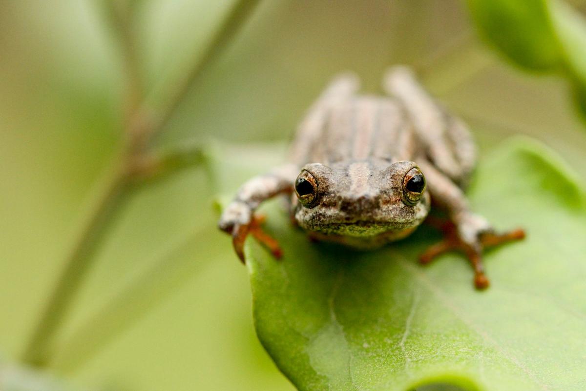 Trev Frog