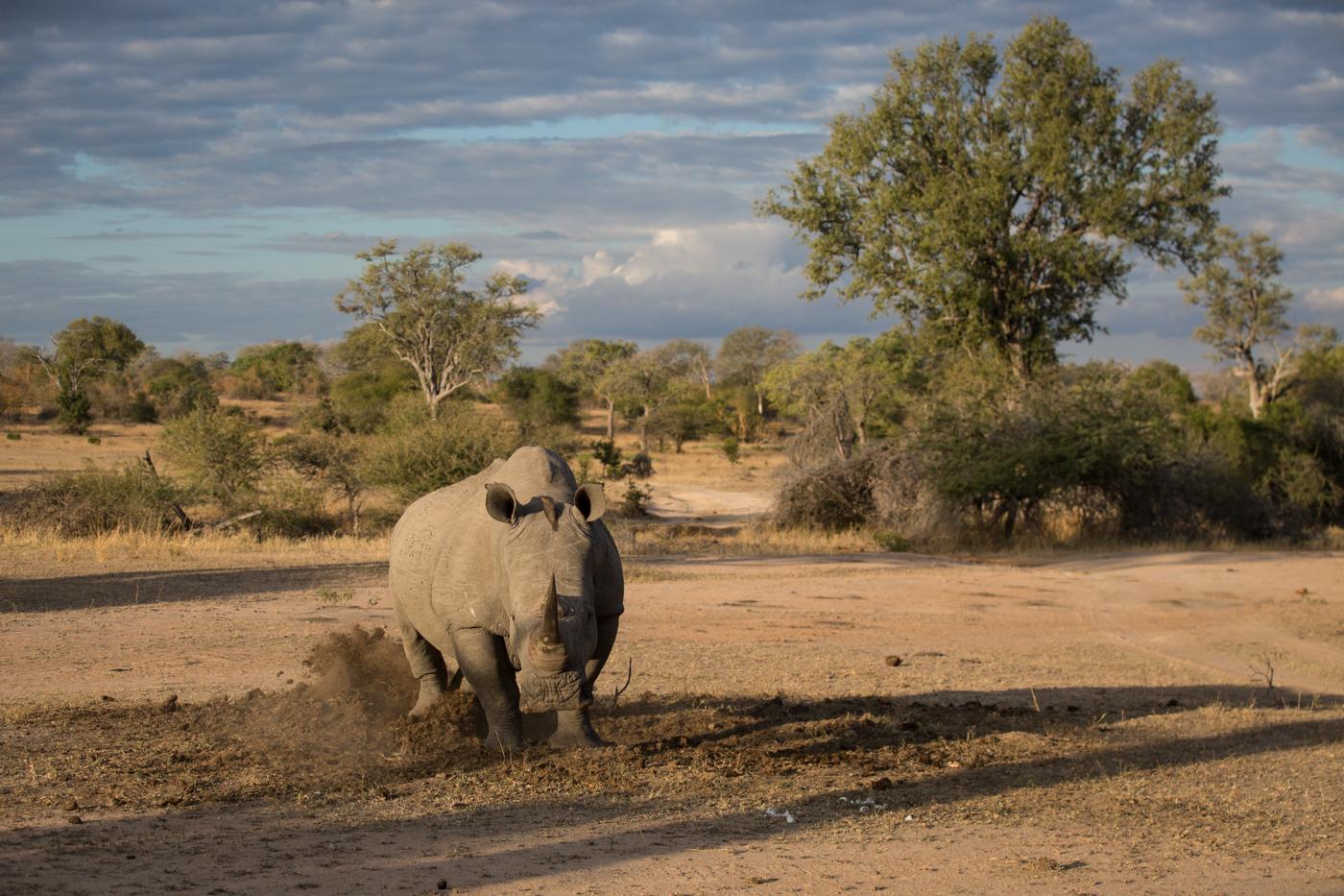 White Rhino Midden