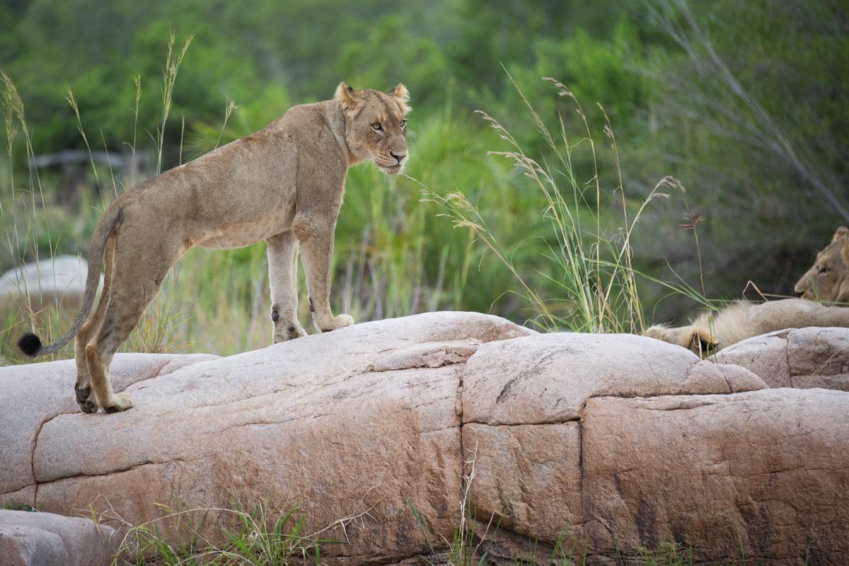 Mhangeni Rock