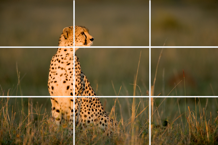 MOC Zuckerman on Composition Rule of Thirds 1-2