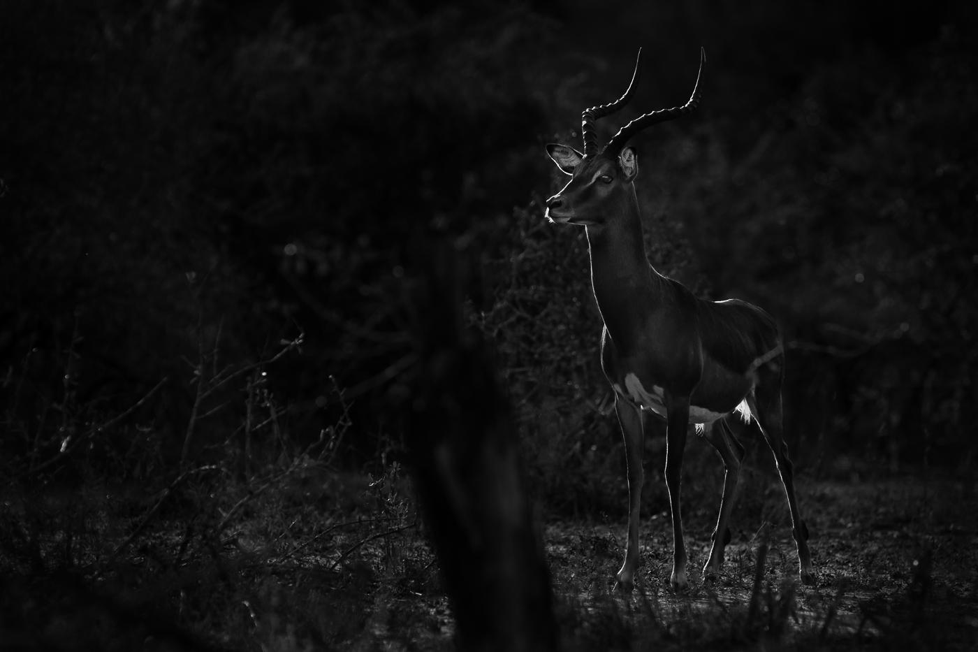 impala alert