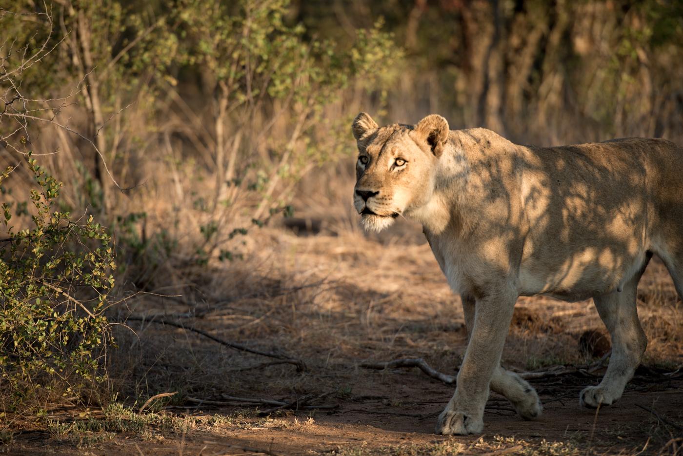mhangeni lionesses, feb 2016, SC