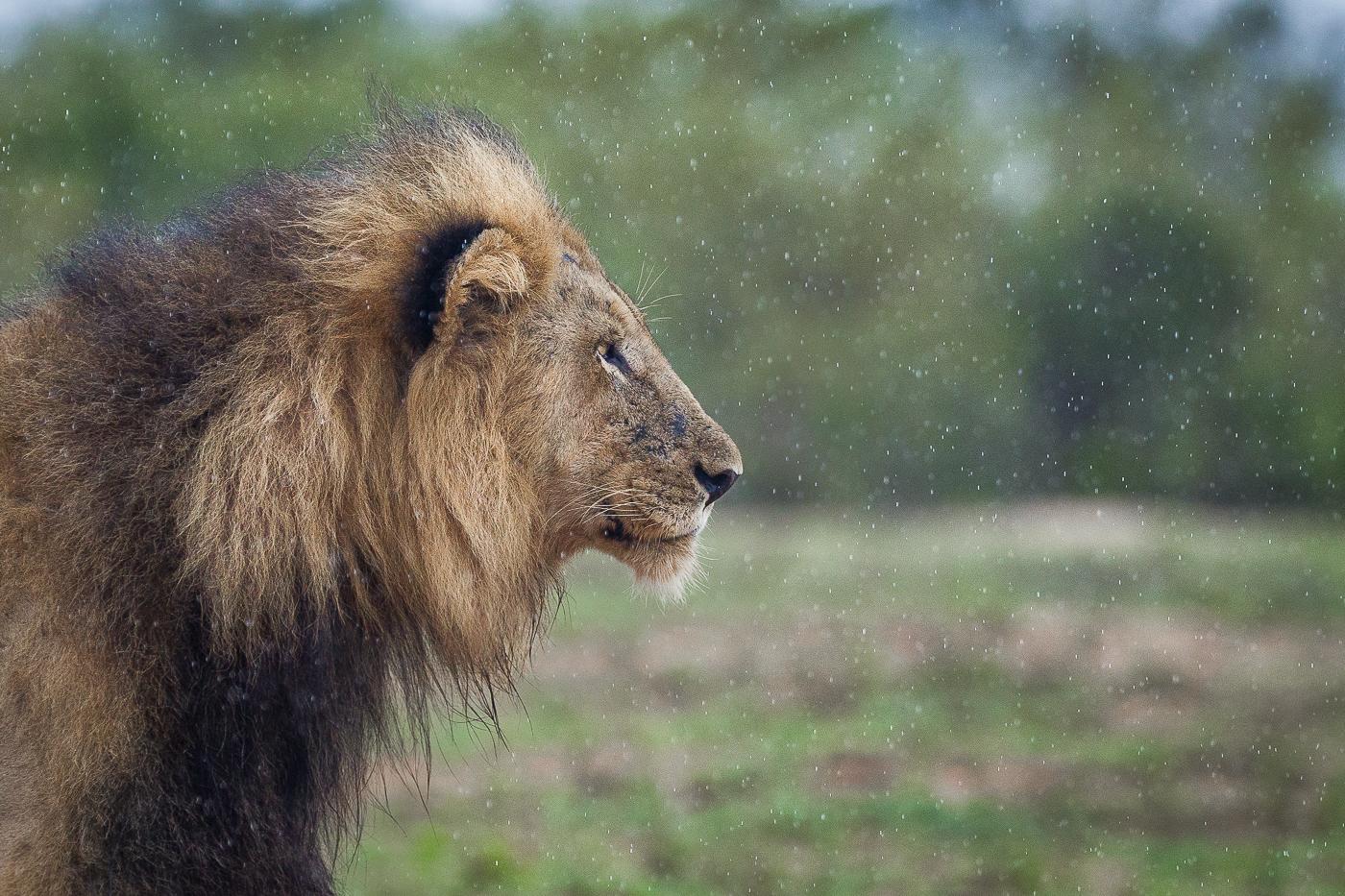 majingi in the rain