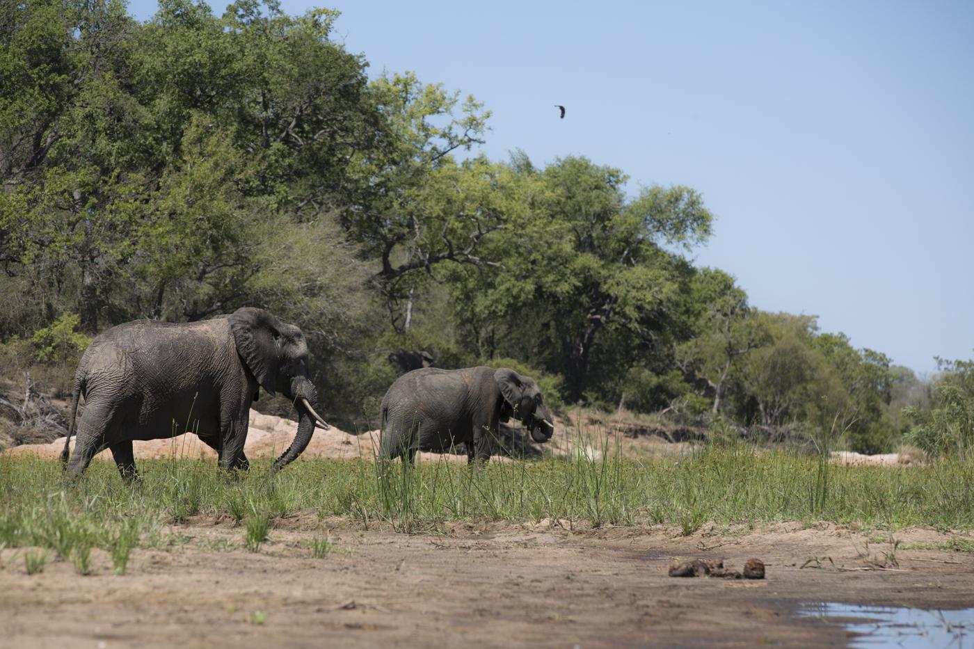Elephants_River Low