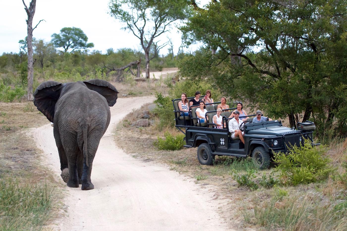 elephant and staff