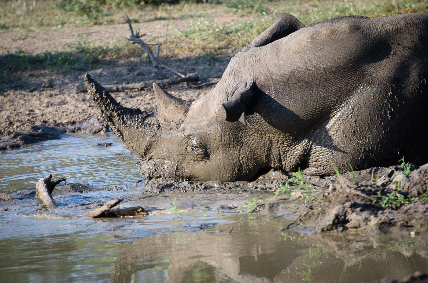 Rhino mud bath 2. KP