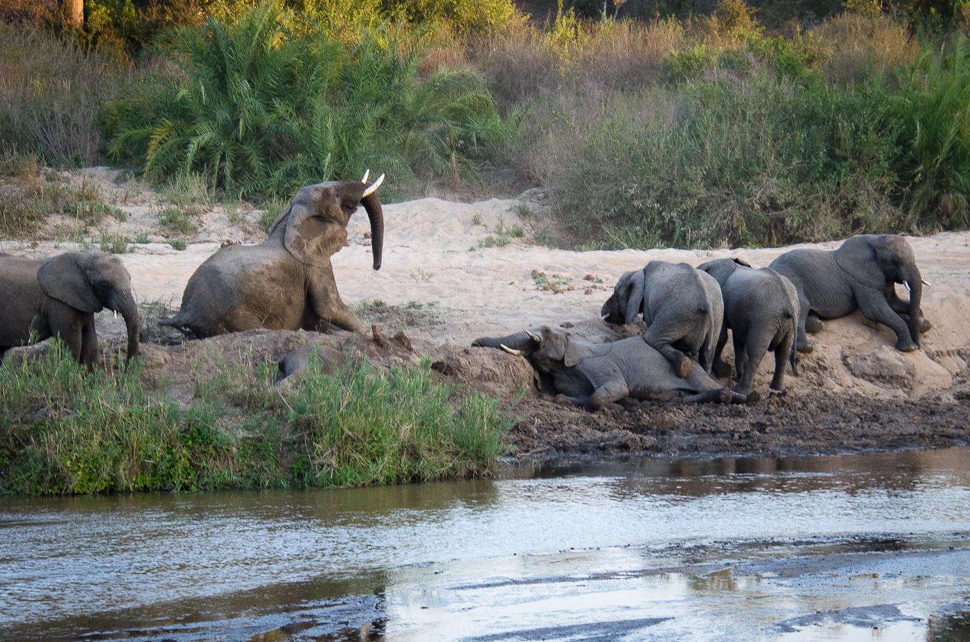 elephants, sand river. KP