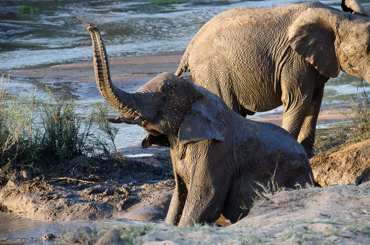 elephants, sand river 1. KP