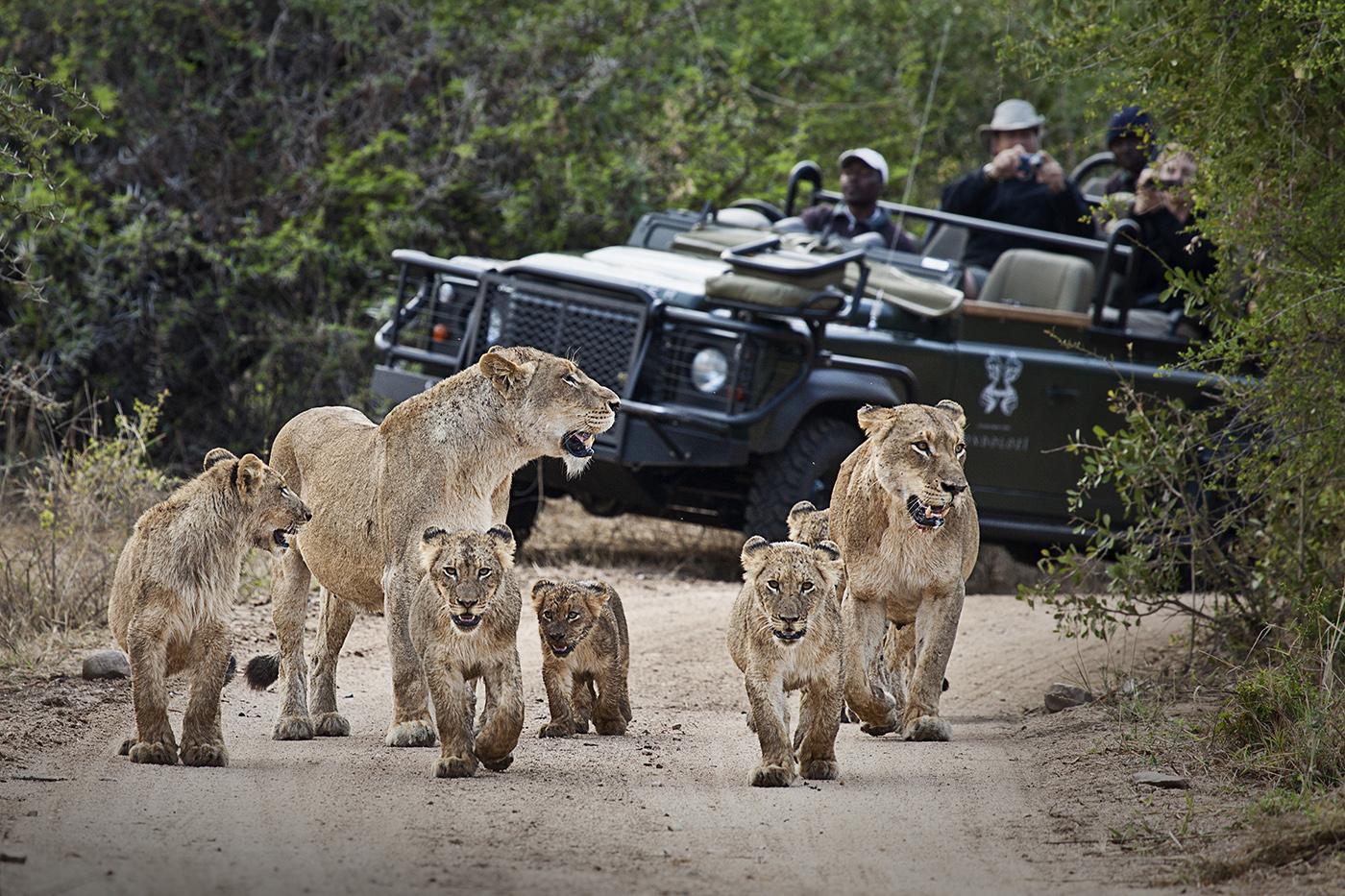 Tsalala Cubs and VehicleSMALL
