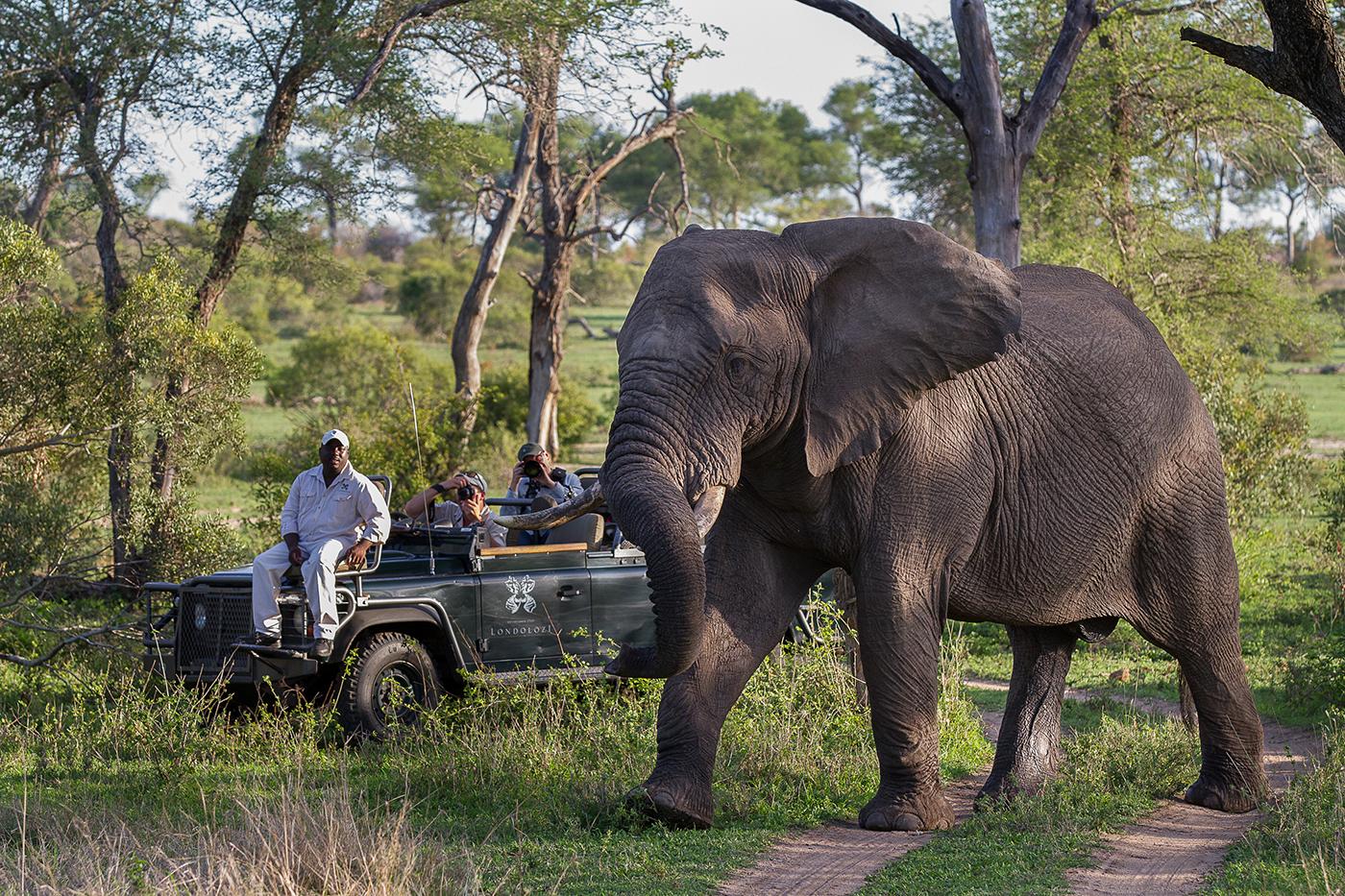 Elephant_Bull_Don_HeynekeSMALL