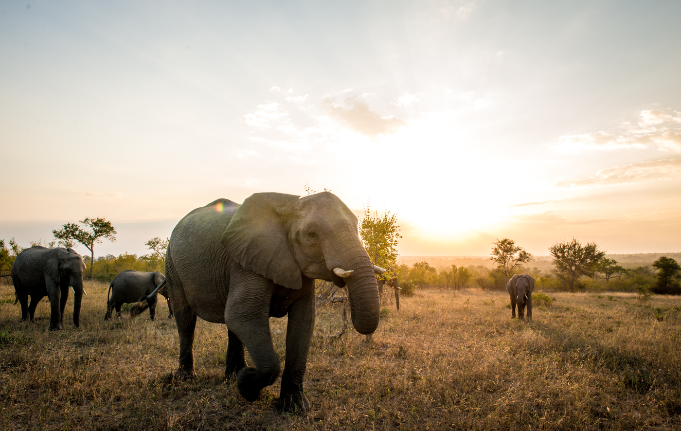 elephant herd, wide, SC