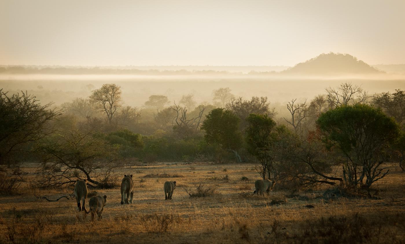 tsalala, landscape, SC