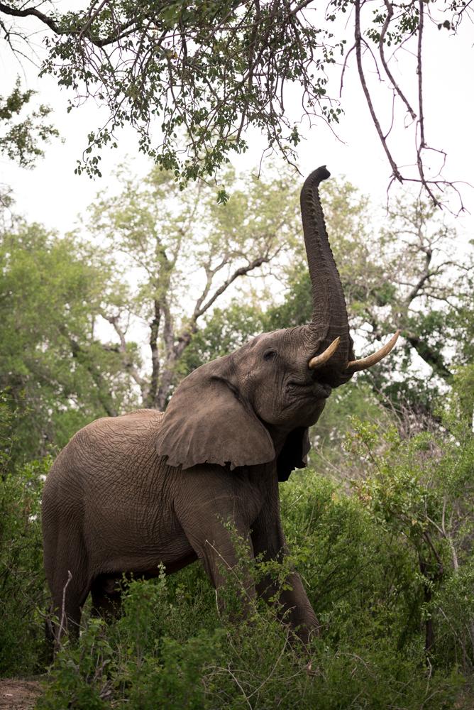 elephant reach, SC