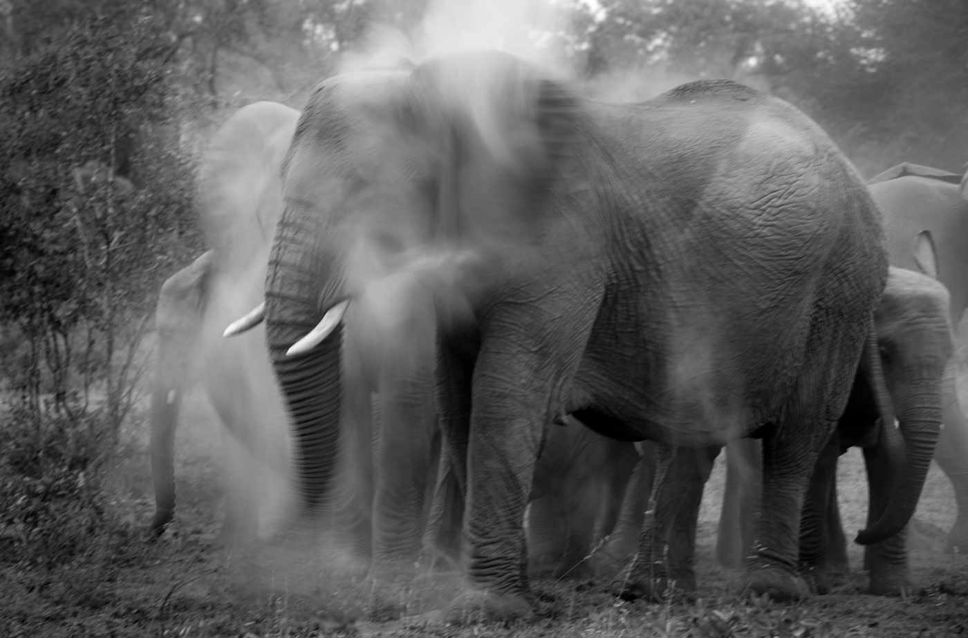 motion blur, elephant, SC