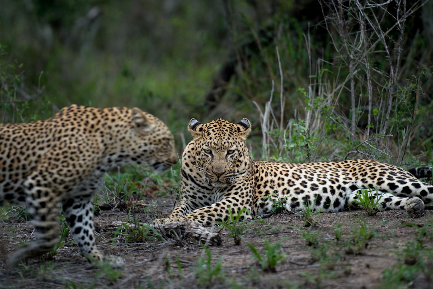 motion blur, inyathini and ndzanzeni, SC