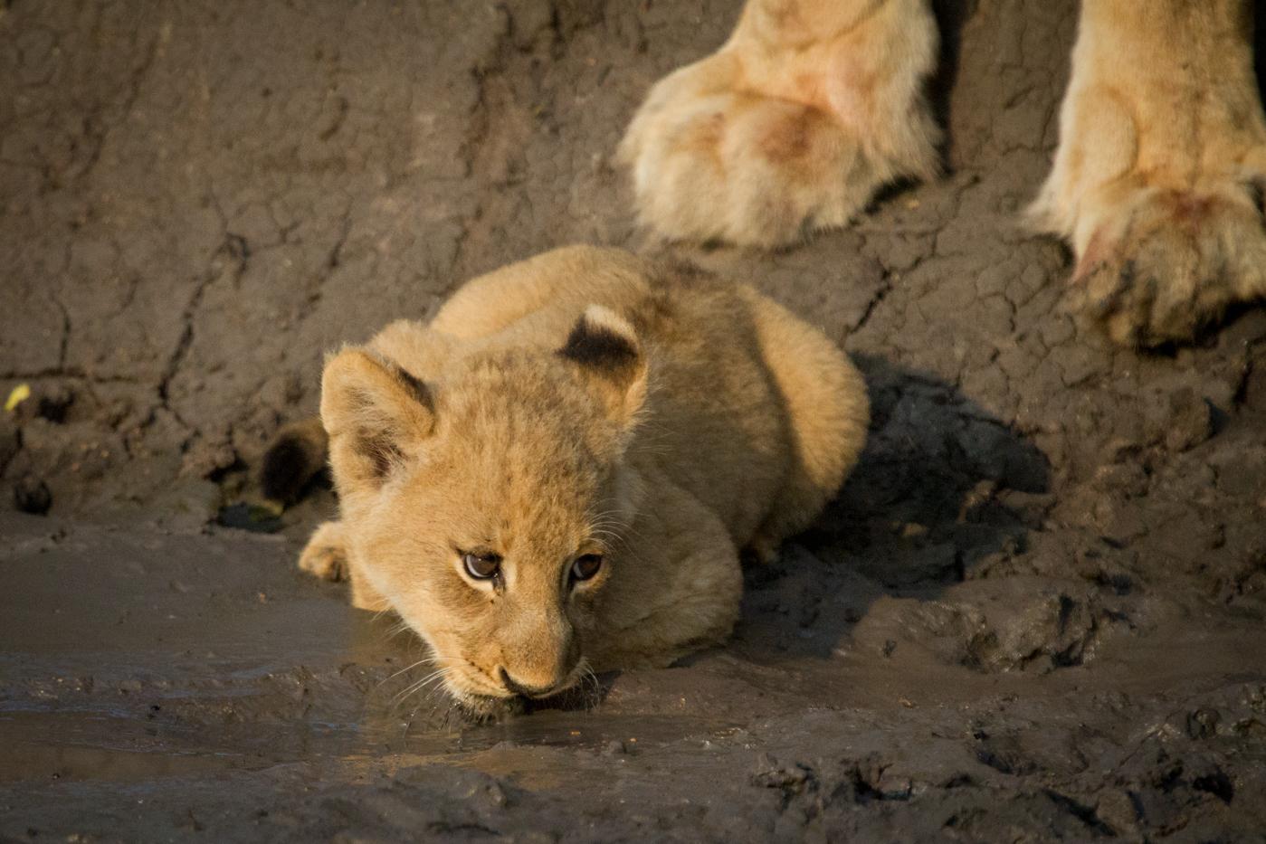 Andrea-Campbell-cub