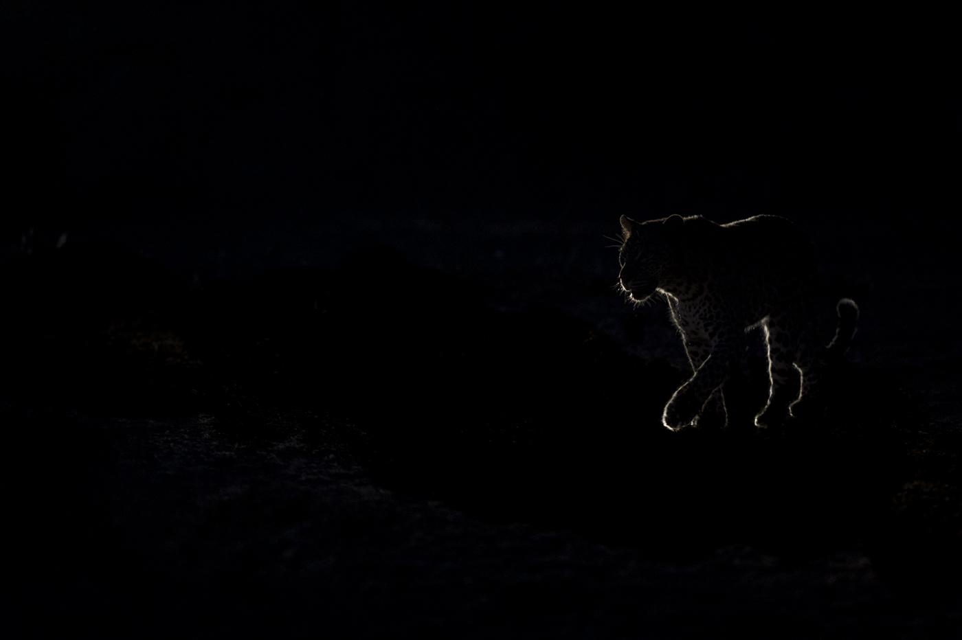 leopard backlight