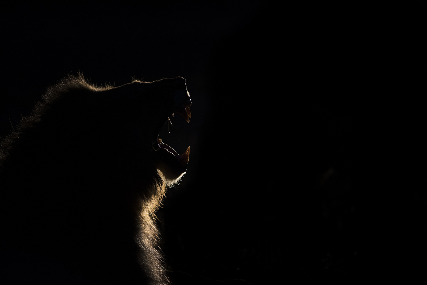 male yawn backlight