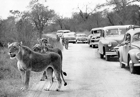 Early-photos-of-the-Kruger-National-Park