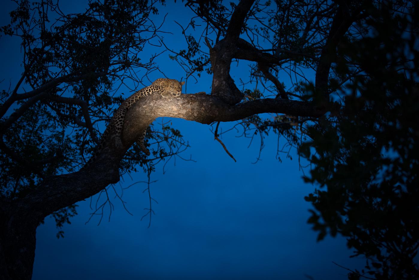 Nkoveni Tree